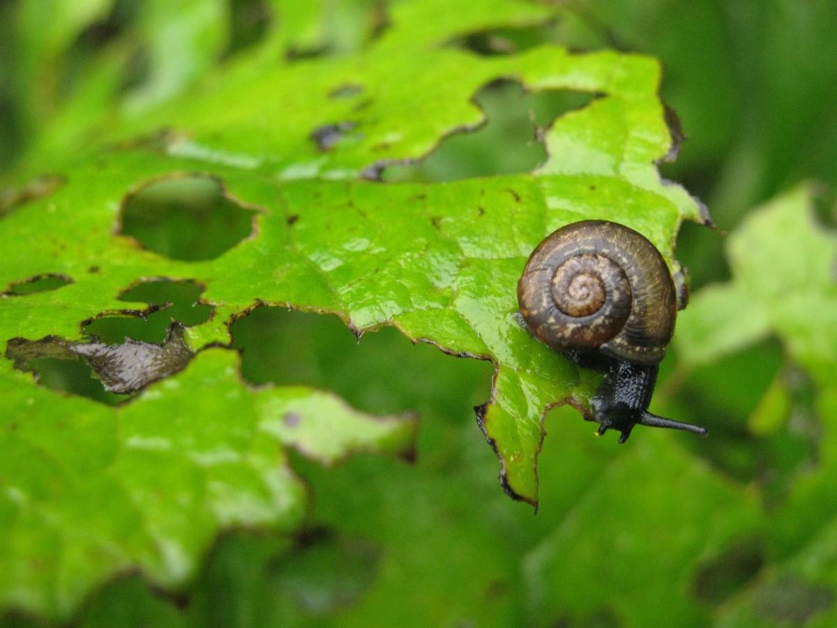 Plagas de plantas: todo lo que necesitas saber para cuidar bien tu jardín