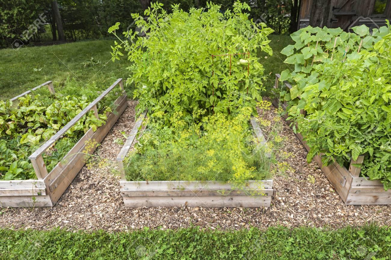 plantas cosechables