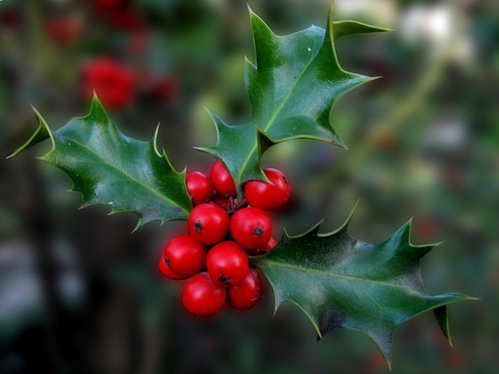 Las mejores plantas para decorar en Navidad