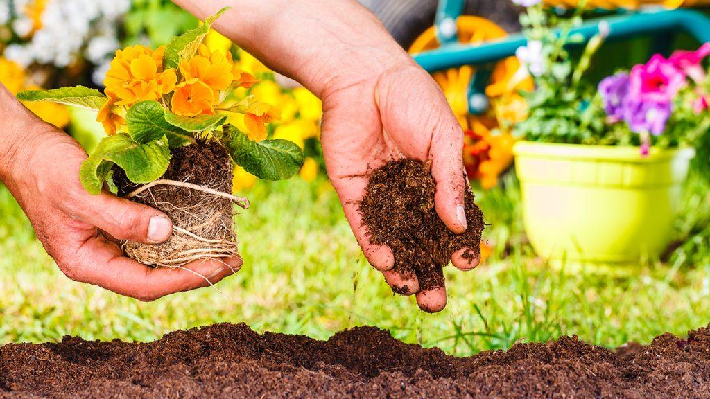 Mantenimiento del jardín, desinfectado del suelo y las plantas