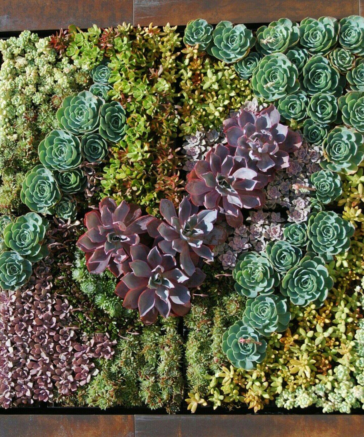 jardin vertical suculenta
