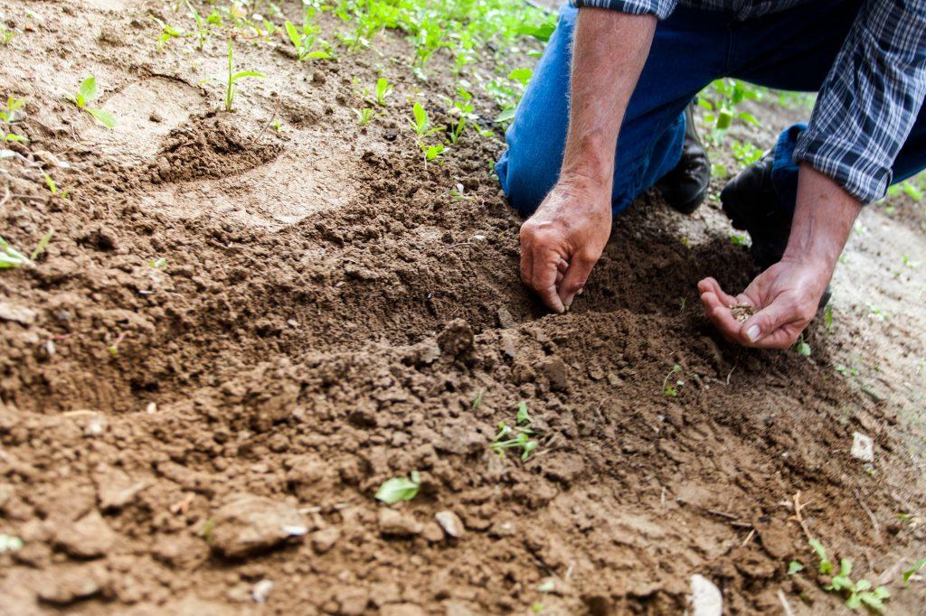 tierra jardineria