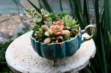 plantas suculentas en una taza