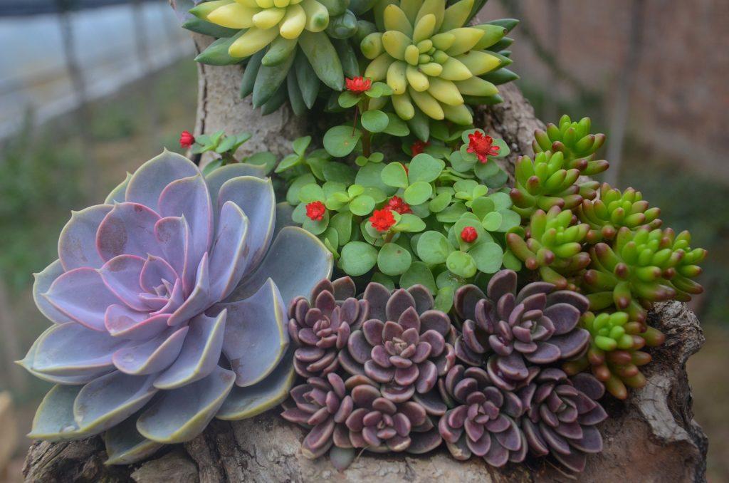plantas jardin suculenta