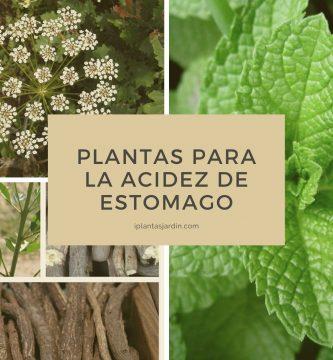 Plantas para la Acidez de Estomago